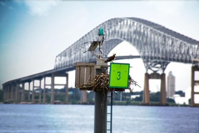 Free bird water bridge maryland inner harbor key bridge