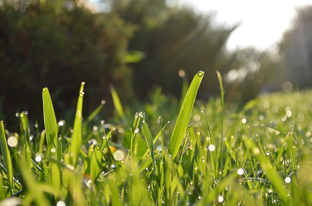 Free grass garden lawn plant morning morning dew