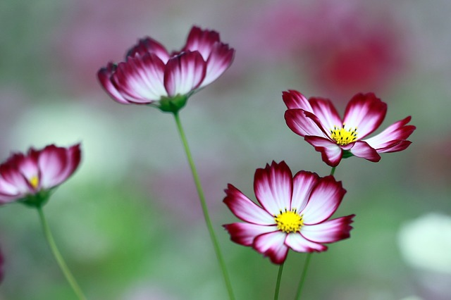 Free cosmos the universe flowers neat