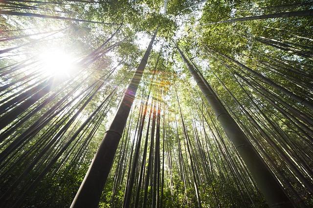 Free               bamboo damyang sunshine