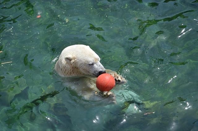 Free polar bear ball water