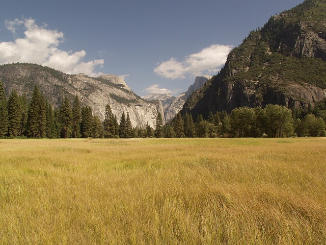 Free yosemite national park valley grassland field