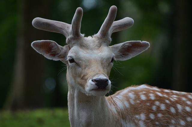Free fallow deer roe deer