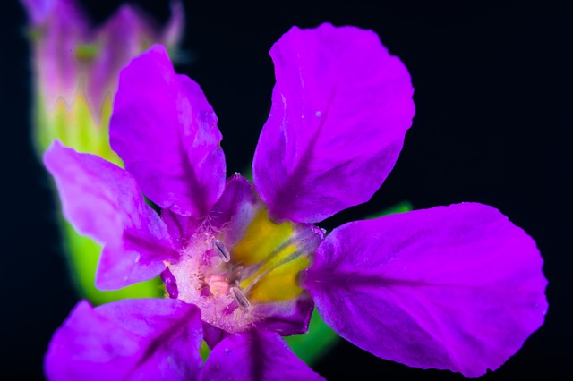 Free small flower flower macro violet purple