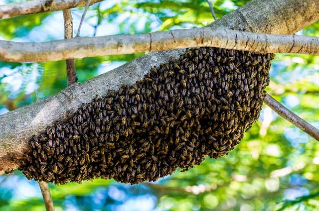 Free hiking bees bees hive