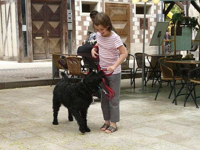 Free dog animal pet labradoodle black girl with dog