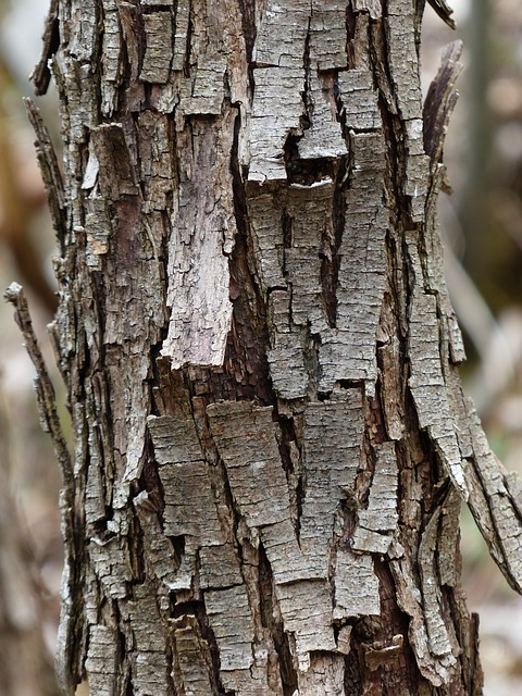 Free tree bark dry flake