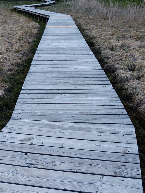 Free Photos: Web boardwalk moor swamp moorland | Hans Braxmeier