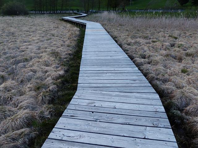 Free web boardwalk moor swamp moorland