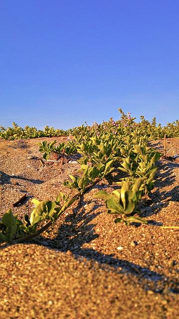 Free sand bush dune desert landscape scenery nature