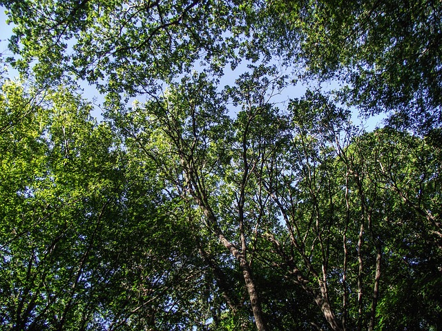 Free Photos: Trees nature green aesthetic leaves branch color | Sophia Hilmar