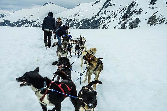 Free sled dogs alaska dog sled sled dog sledding snow
