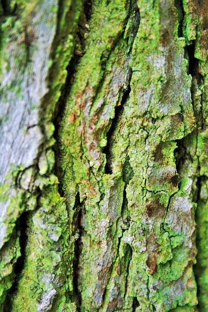Free Photos: Tree bark bark trunk tree rough textured cracks | Lynn Greyling