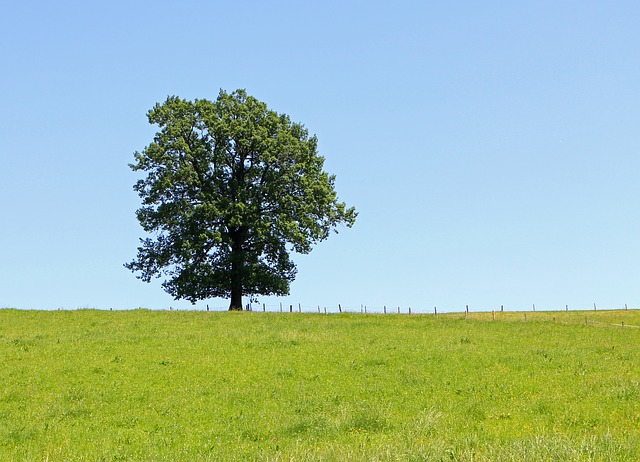 Free tree individually meadow pasture blue sky green