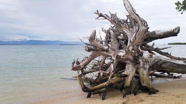Free beach sand tree trunk sea ocean water sky