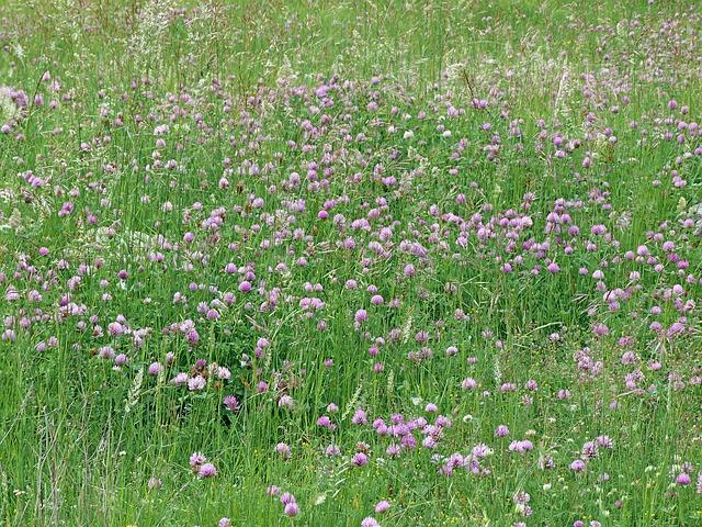 Free landscape nature prairie fleurs des champs campaign