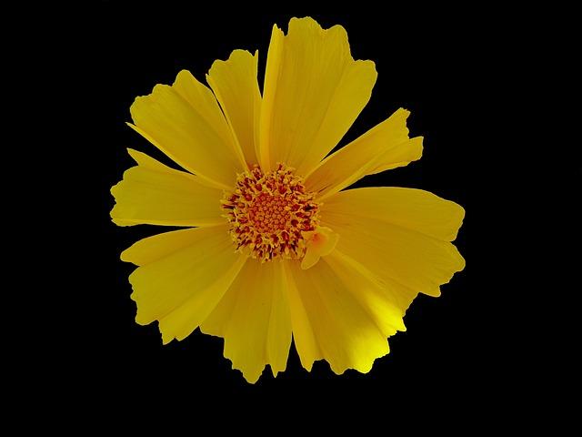 Free flowers macro yellow garden petal flower nature