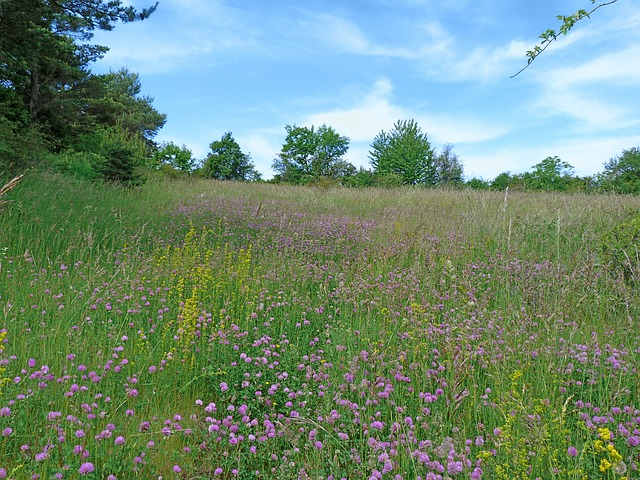 Free landscape nature campaign spring flowering prairie
