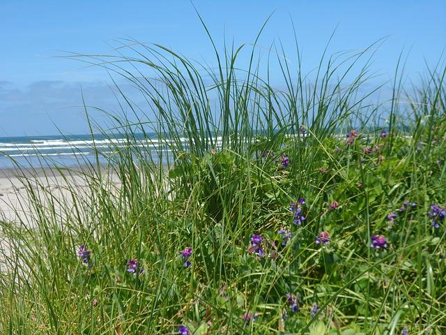 Free sea grass close up ocean view flower nature