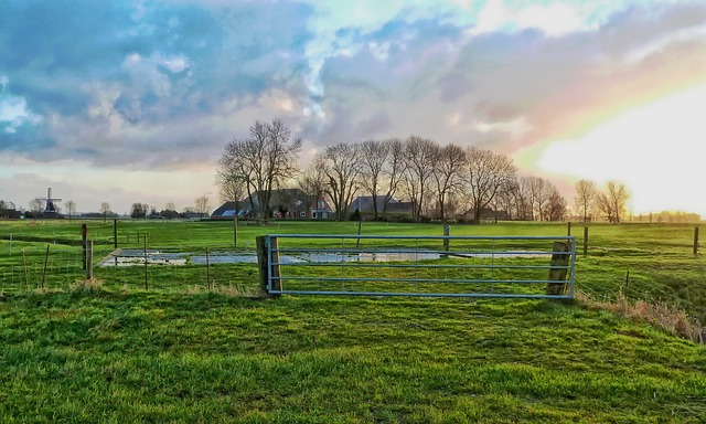 Free netherlands farm rural trees field pasture meadow