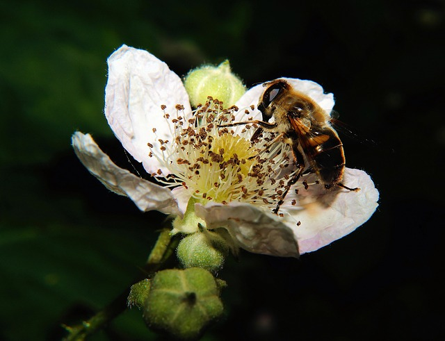 Free flower white bee pollination close insect