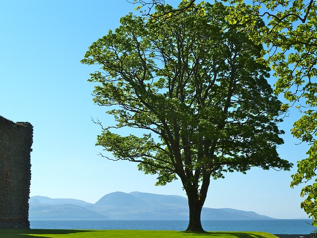 Free tree ocean bay nature leaves distance