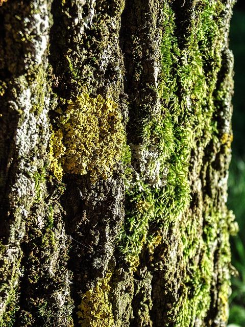 Free tree log bark wood moss tribe mushroom green
