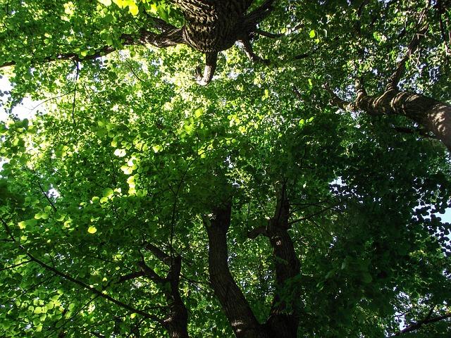 Free Photos: Tree green road aesthetic journal leaves branch | Sophia Hilmar
