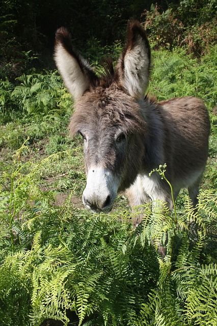 Free animal donkey head ears young