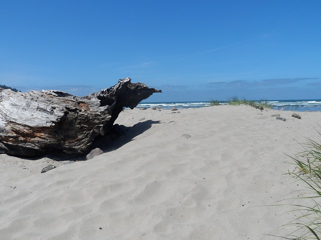 Free beach driftwood ocean view sand log shore scenery