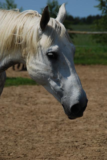 Free the horse animal catwalk pet the mane