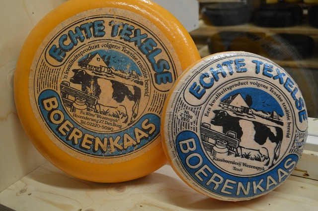 Free cheese texel netherlands west frisian farmer farm