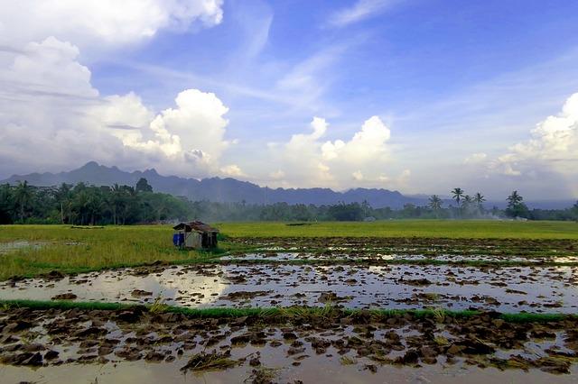 Free landscape natural rice field nature beautiful sky