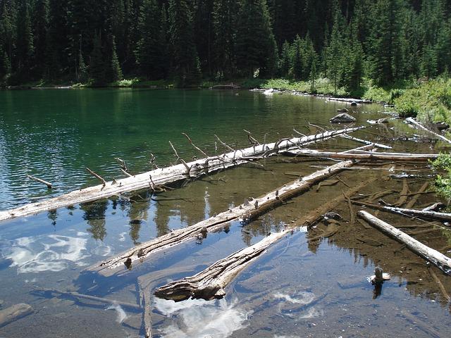 Free drift wood water logs