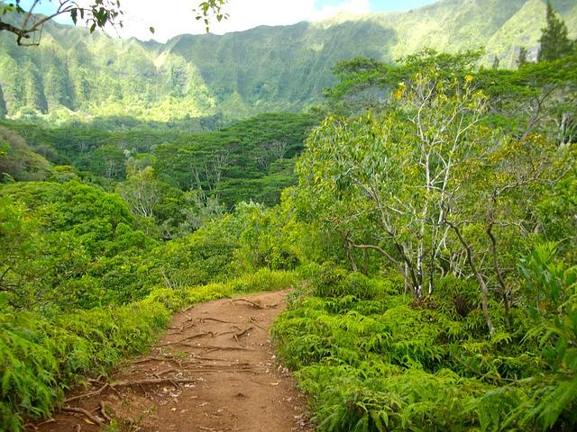 Free hawaii hiking path pathway trail hike hill