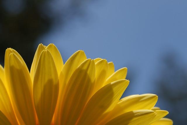 Free daisy gerbera daisies flower spring plant bloom