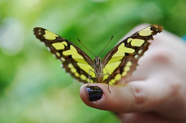 Free butterfly dolls dolls butterflies rest sleeve