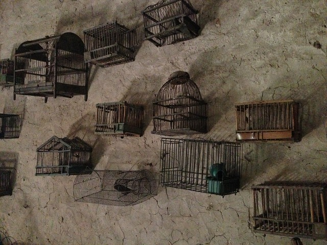 Free cages collection wall