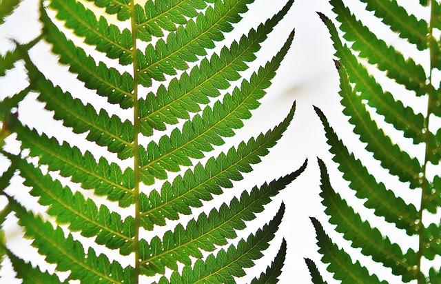 Free tree fern rainforest macro summer nature green