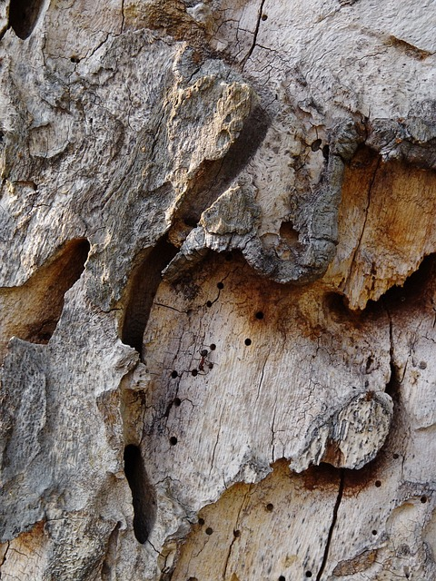 Free tree bark tree structure bark close rau cracked