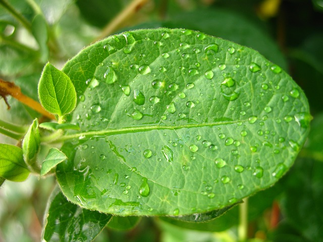 Free dops green leaf water plant
