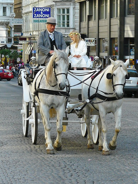 Free vienna coach carriage ride horses horse