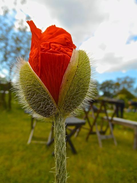 Free red buds flower cloud himmel