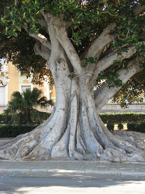 Free calabria italy reggio calabria sun summer tree