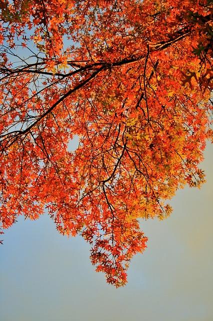 Free orange leaves tree leaves foliage orange bright