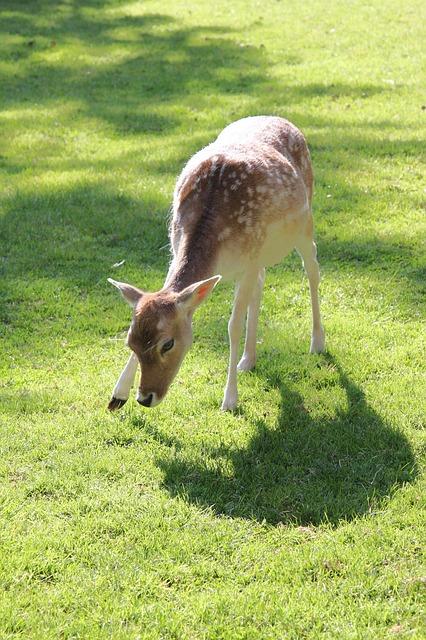 Free roe deer pasture meadow forest animal graze food