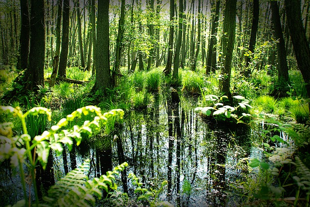 Free forest darß spring trees pond mirroring grasses