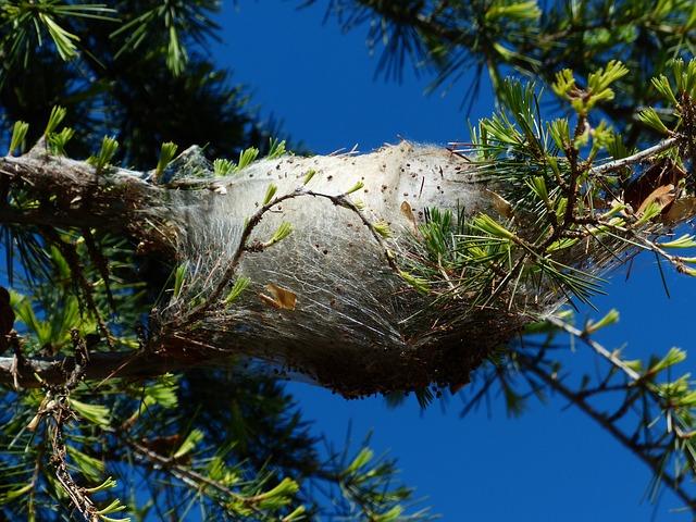 Free spun yarn nest track spun nests pine processionary