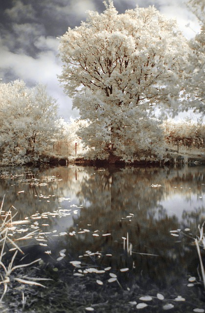 Free ir infrared tree nature landscape water pond