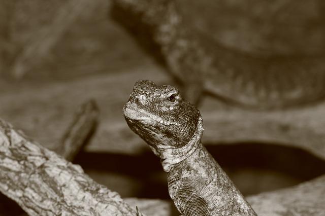 Free lizard reptile terrarium urtier chameleon jungle
